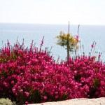 素敵な庭のお花や緑の芝生 — ストック写真