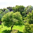 Стоковое фото: Nice garden with flowers and green lawn