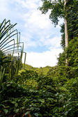Piękny las deszczowy — Zdjęcie stockowe