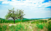 Tree on the mountain — Stock fotografie