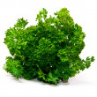 Fresh leaf of parsley — Stock Photo