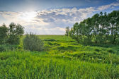 Trees on green meadow under cloudy sky — Stock Photo