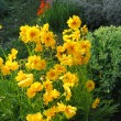 Yellow flowers in summer garden - Stock Photo