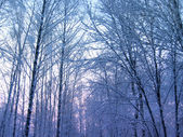 Winter trees — Foto de Stock