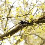 Woodpecker — Stock Photo #10315399