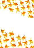 Goldfishes — Stock Photo