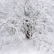 Frozen tree. — Stock Photo #8230013