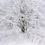 Frozen tree. — Stock Photo