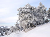 Wintry landscape with snowy trees. — Stock Photo