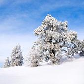 Winter. — Photo