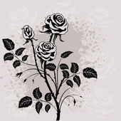 Black rose. — Vector de stock