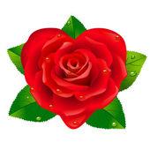 červená růže jako srdce. — Stock vektor