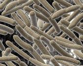Bacillus on blurred background. — Stock Photo