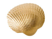 Gold shell isolated on white background. — Stock Photo