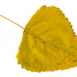 Leaf of poplar — Stock Photo #8397339