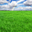 Stock Photo: Green grass meadow, field