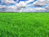 Green grass meadow, field — Stock Photo