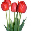 Stock Photo: Flower tulips close up