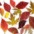 Collection of autumn leafs - Stock Photo