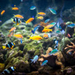 Coral reef and fishes. — Stock Photo