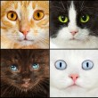 Cat close up - Stock Photo