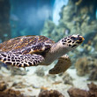 eretmochelys imbricata — Stock Photo