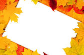 White sheet of paper and autumn leaves — Stock Photo