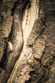 Old tree bark stylized antique photos — Stock Photo