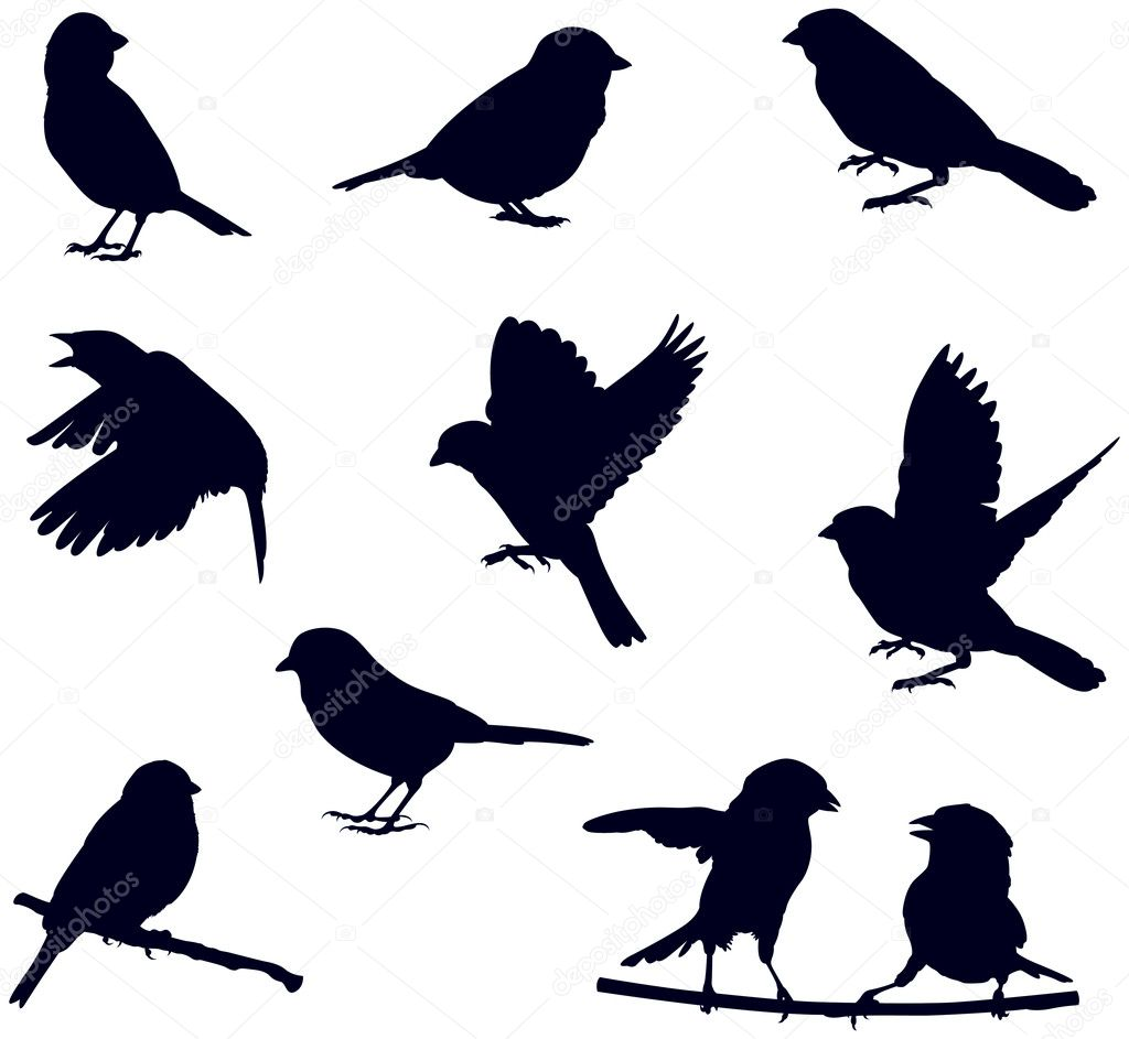 Bird silhouettes — Stock Vector #10317007