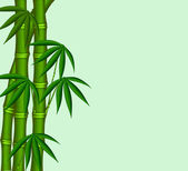The Young bamboo — Stock Photo