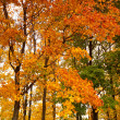 Bright colors of autumn - Stock Photo
