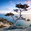 Tree on a cliff — Stock Photo
