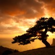 Old tree silhoutte - Stock Photo