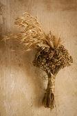 Suszonych roślin — Zdjęcie stockowe