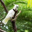 Stock Photo: White parrot of cockatoo sits on branch