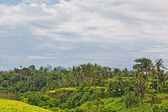 Kind on jungle on island Bali — Stock Photo