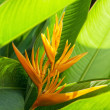 Beautiful Bird of Paradise flower, known as Strelitzia. - Stock Photo