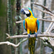 Colorful Parrot Sitting On A Branch - Stock Photo