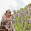 Wild monkey against the temple to Uluvatu — Stock Photo