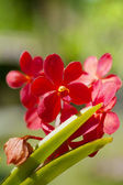 Exotic orchids growing on island Bali — Stock Photo
