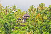 Wooden house in the jungle on the island of Bali — Stock Photo