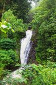 Gitgit vattenfall — Stockfoto