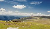 Montagna alta — Foto Stock