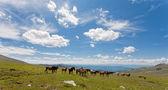 Mountain Altai. — Stock Photo