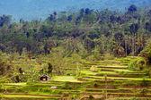 Terrace rice fields, Bali, Indonesia — Stock Photo