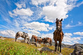 Harnessed horse against mountains — Stock Photo