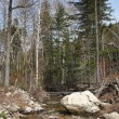 Mountain river flows on stones on an impassable taiga in the spring — Stock Photo