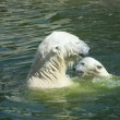 Polar bear — Stockfoto #9674817