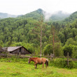 Mountains landscape with horse. Altai, Siberia - Stock Photo