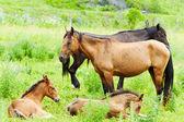 Cavalos com potros pastem num prado verde — Fotografia Stock